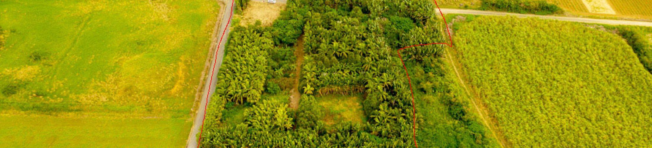 西表島で一緒に農業したい人、おらん?